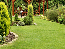 Maintained Lawn - Lawn Maintenance
